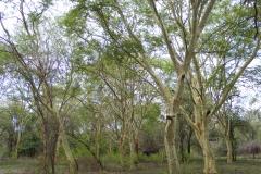 Trees A