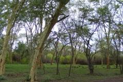 Trees B